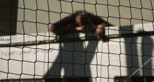 أشهر عمليات الهروب من السجن (الجزء الأول)