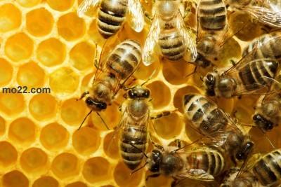 خمسة أشياء لا تعلمها عن النحل