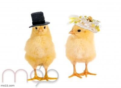 خمسة من أغرب تقاليد الزواج في العالم