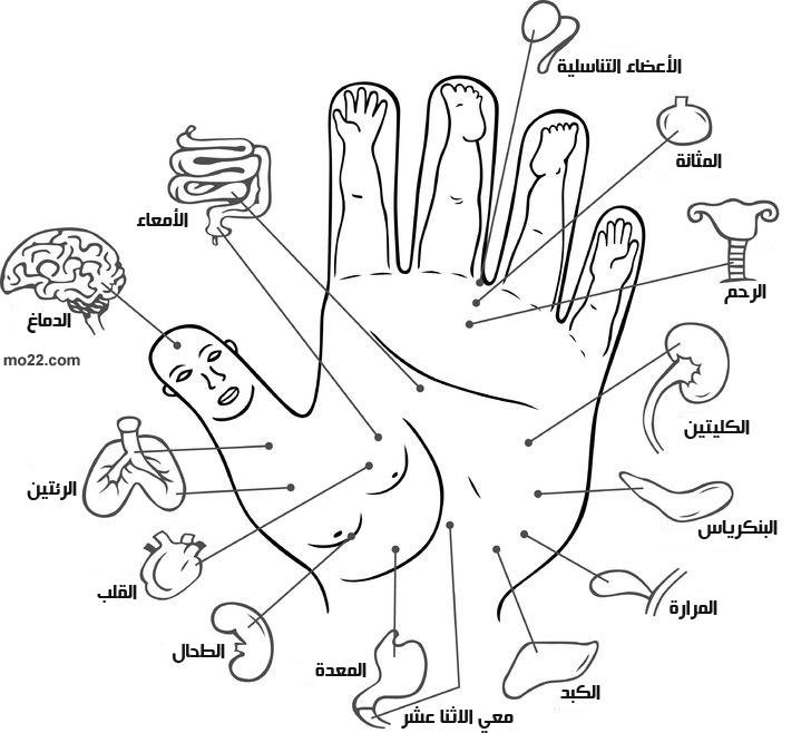 نقاط الوخز بالإبر هي مواقع افتراضية على الجسم تستخدم لعلاج الوخز بالابر الصينية