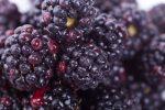 فاكهة التوت الأسود