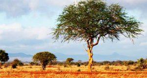 السافانا الوحشية الافريقية وقبلة للسواح