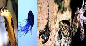 اخطر 5 حيوانات على وجه الأرض