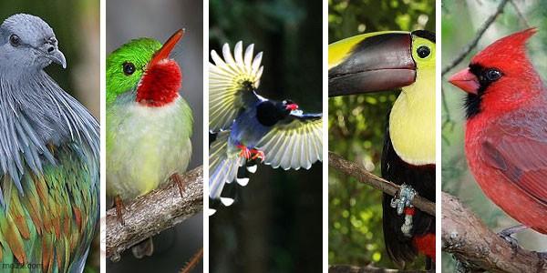 الطيور الخمس الأجمل حول العالم